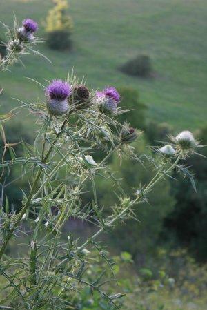 Valle Tezze: fiori