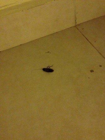 BlueBay Grand Esmeralda : Dead Cockroach in Room/Bldg 4