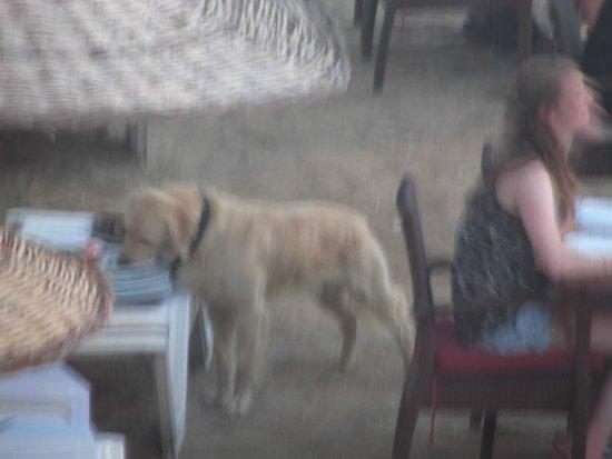 Hotel Sun Club: Tabağı Yalayan Köpek.