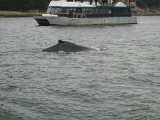 Weather Permitting Alaska - Whale Watching: One of many whales we saw.