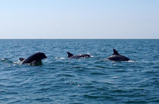 Dolphin tour! - Picture of Marshwalk Water Sports, Murrells Inlet ...