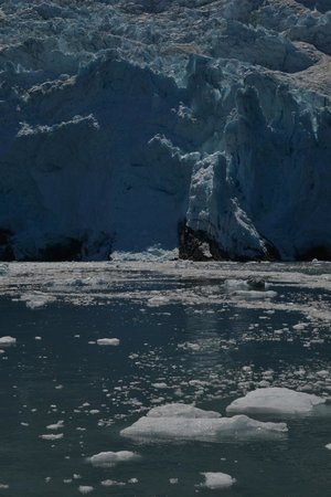 26 Glacier Cruise by Phillips Cruises and Tours: A glacier is constantly feeding itself  into the sound.