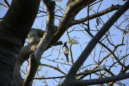 Umlilo Lodge B&B: Hornbill in the tree just outside our door. :)