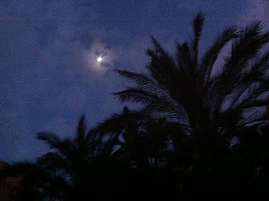 Melia Benidorm: moonlight sun bed saving 6.30am