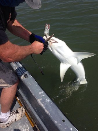 Mad Shark Charters: One of many caught.