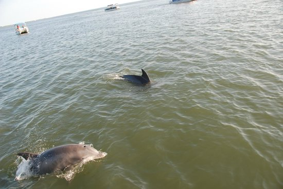 Daisey's Island Cruises: Dolphins