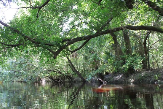 Canoe Outpost - Little Manatee River: Beautiful ride