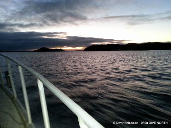 Dive North: The perfect place for a night dive