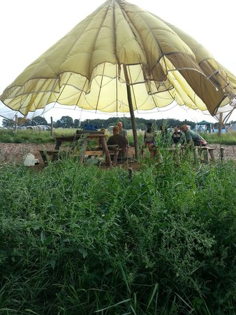 Bedgebury Camping: Bushcraft