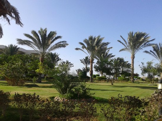 Hilton Hurghada Long Beach Resort: Garden