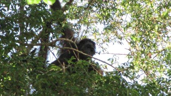 Myne Resort : Orangutan