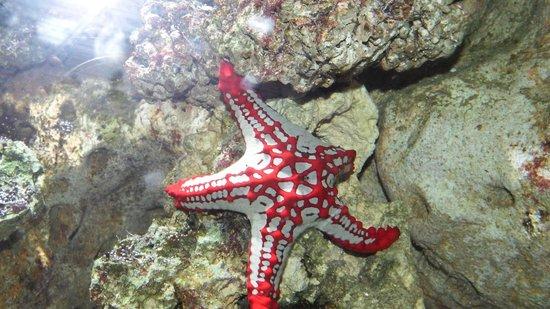 ARTIS Amsterdam Royal Zoo : Starfish