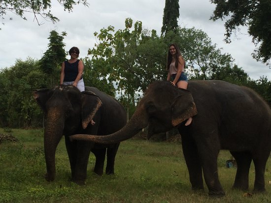Tour with Tong: Riding elephants