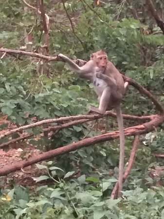 Tour with Tong: Saw these cheeky monkeys en route