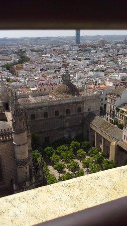 Catedral de Sevilla: De cima... ainda na torre, o pátio das laranjas, que eu ainda não havia visitado.