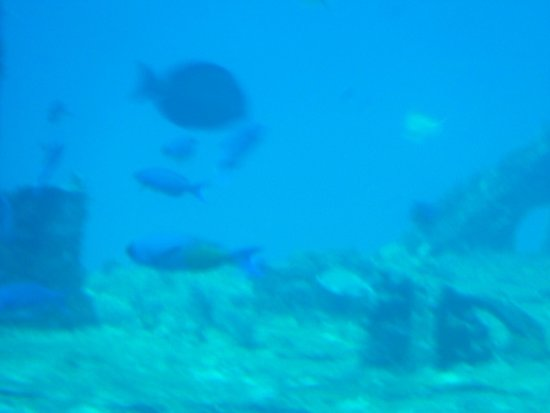 De Palm Tours: Atlantis Submarines Expedition: Lots of tropical fish to see