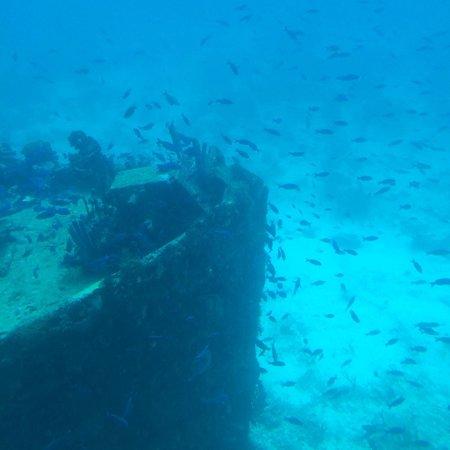 De Palm Tours: Atlantis Submarines Expedition: Ship Wreck viewed on the Atlantis Sub Trip July 2014