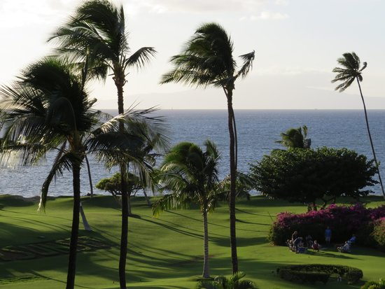 Maui Sunset Condos: gorgeous grounds, and yes it's real grass, not astro-turf!