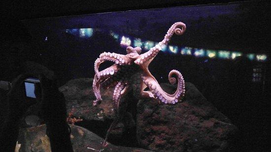 L'Aquarium de Barcelona : Barcelona Aquarium
