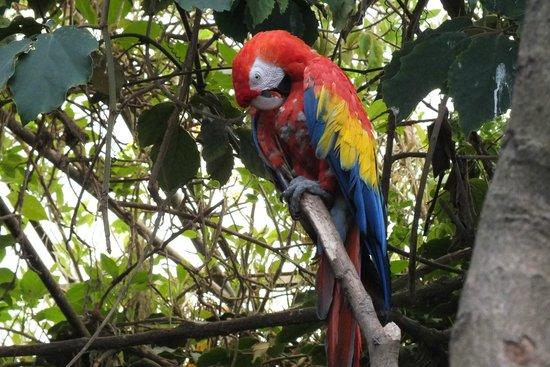 Amazon World Zoo Park: Who's a pretty boy then