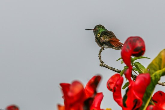 Arenal Springs Resort and Spa: Hummingbird outside our room