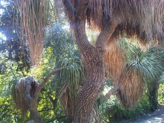 Giardini Botanici Hanbury: yucca