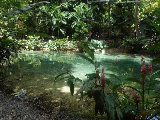 Rainforest Adventures Jamaica: Beautiful surroundings