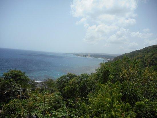 Rainforest Adventures Jamaica: View from the sky explorer