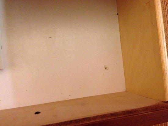 Residence Inn Louisville East : Bug in drawer