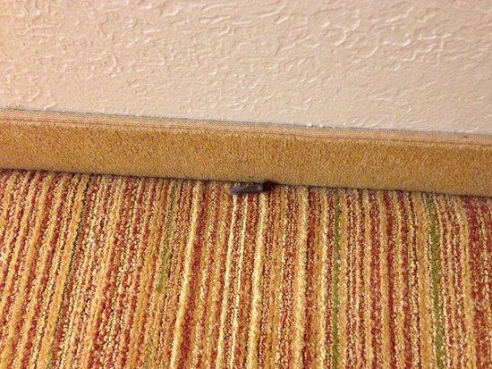 Residence Inn Louisville East : Dirt on floor