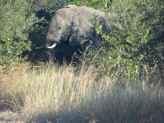 Maramba River Lodge: Elephant sighting