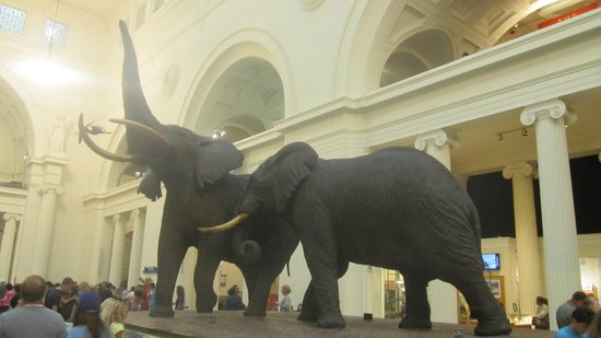 The Field Museum: Carl Akeley Elephants