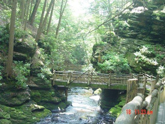 Bushkill Falls : Trail