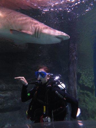 Manly Sea Life Sanctuary - Shark Dive Xtreme : Shark dive aurelie august 14 manly sealife