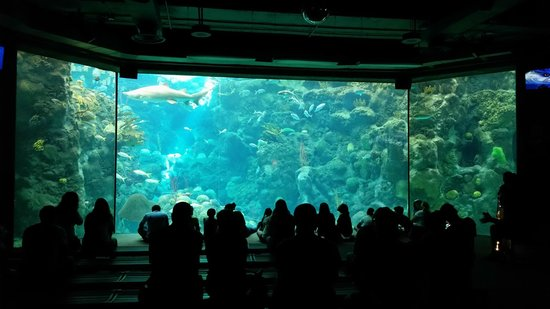 The Florida Aquarium: Impressive!