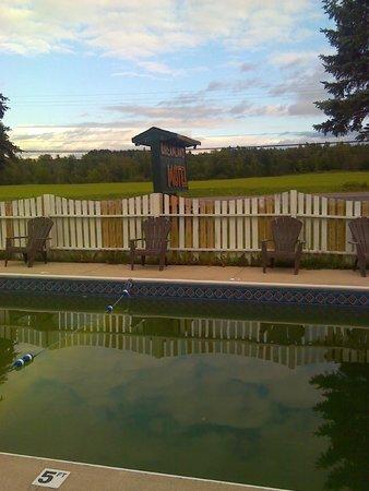 Dreamland Motel: Green pool