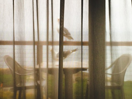 Timber Cove Resort : Seagulls were our alarms in the morning. Loved this'