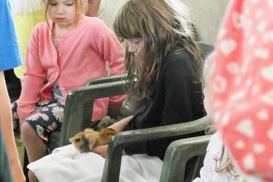 Appuldurcombe House: Small Animal Handling