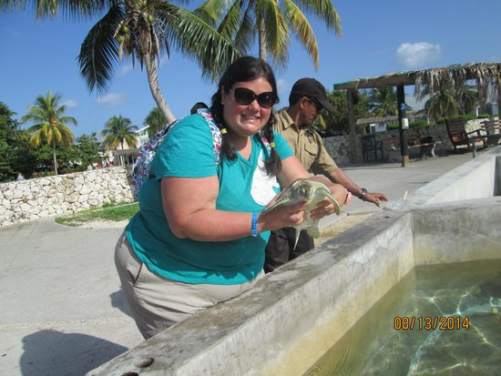 Cayman Turtle Centre: Island Wildlife Encounter: Holding the turtles
