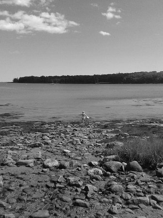 Ledges By the Bay: Shore