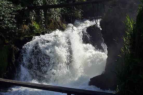 Tumwater Falls Park: Fall