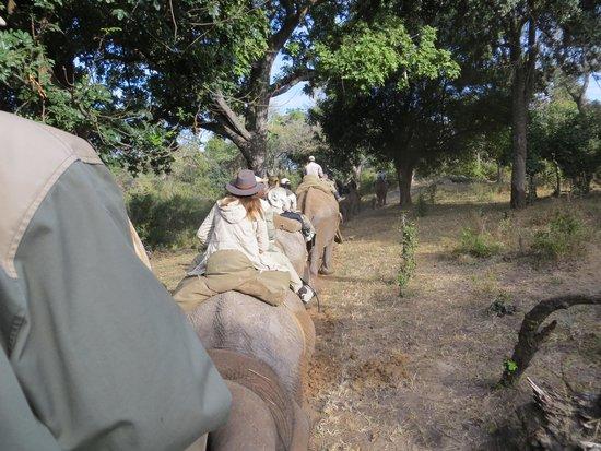 Safari Par Excellence: Safari trail ride