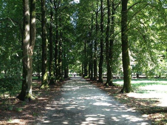 Villa Varda: Uno dei lunghi viali alberati
