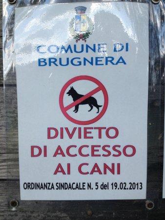 Villa Varda: No cani