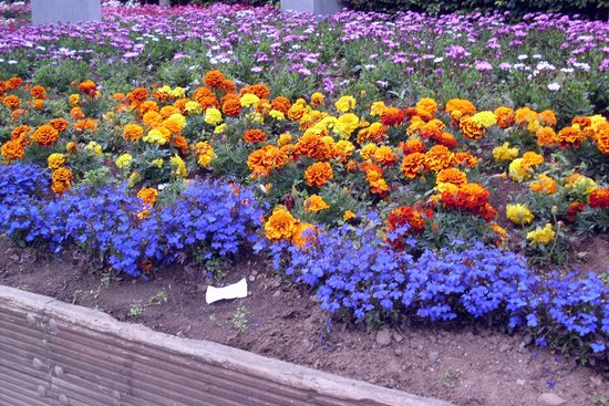Eyre Square: Flowers galore