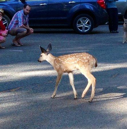 "Half Dome Village: ""Bambi"" in Curry Village"