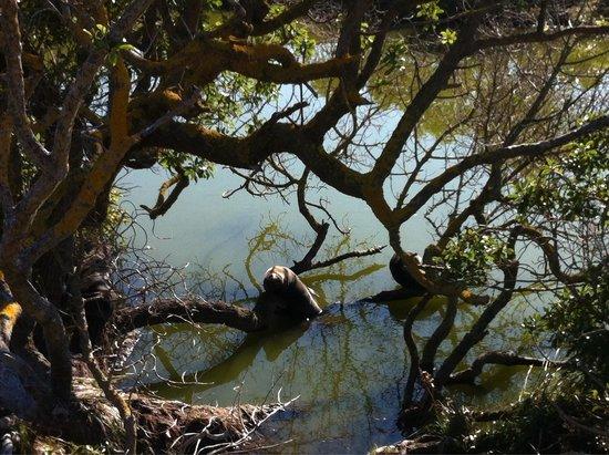 Colonia de focas: Seal pups in the trees!