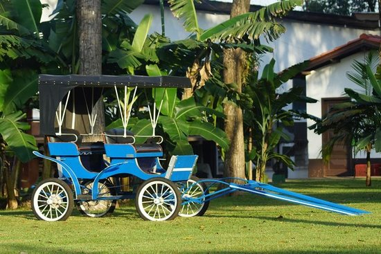 Carima Resort Hotel & Convention: Natureza