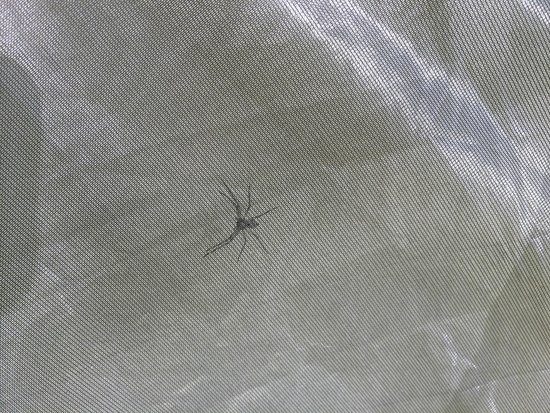 Newtown Battlefield State Park: spiders on tent