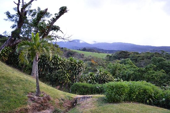 Hotel Mango Valley: The view from our cabin. What a great place to drink local coffee each morning